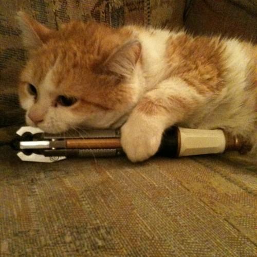 cat-screwdriver